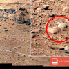 Rats Found On Mars?!